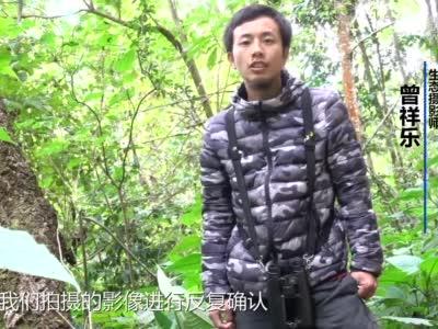 生态摄影师在云南德宏拍摄到云猫影像