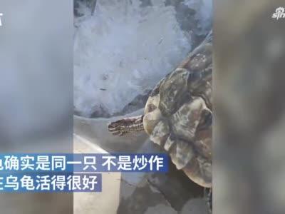 新乡一冻乌龟下锅后突然活了?主人:未炒作 乌龟是同一只