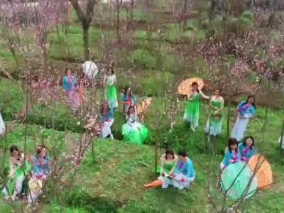 视频丨春色中的一抹粉 甜蜜了这个初春