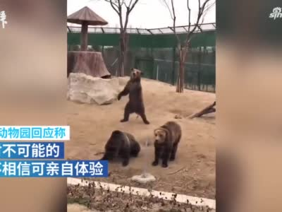 被指用人扮演大黑熊,周口野生动物园回应