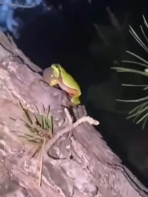 因为一只青蛙而引起的合奏