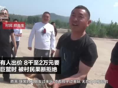 百年巨鳖上岸被捉 重46斤 有人出价2万元购买,被村民果断拒绝后放生