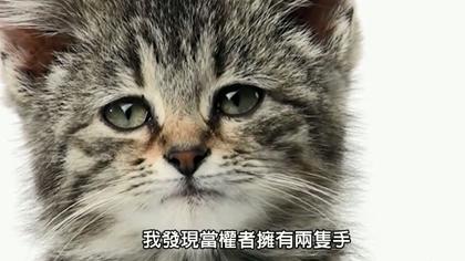 小猫伤心卡通图片大全