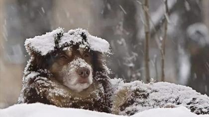 下雪降温 动物如何过冬