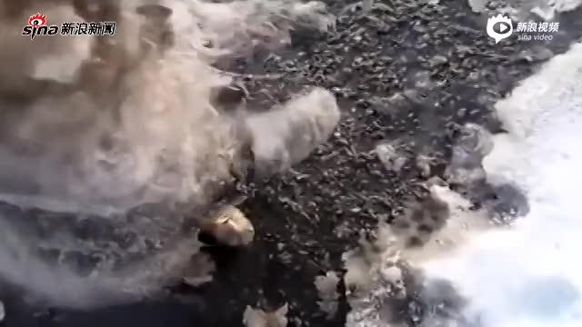 猫咪前脚被冰封在冰天雪地里冻僵 好心情侣解救