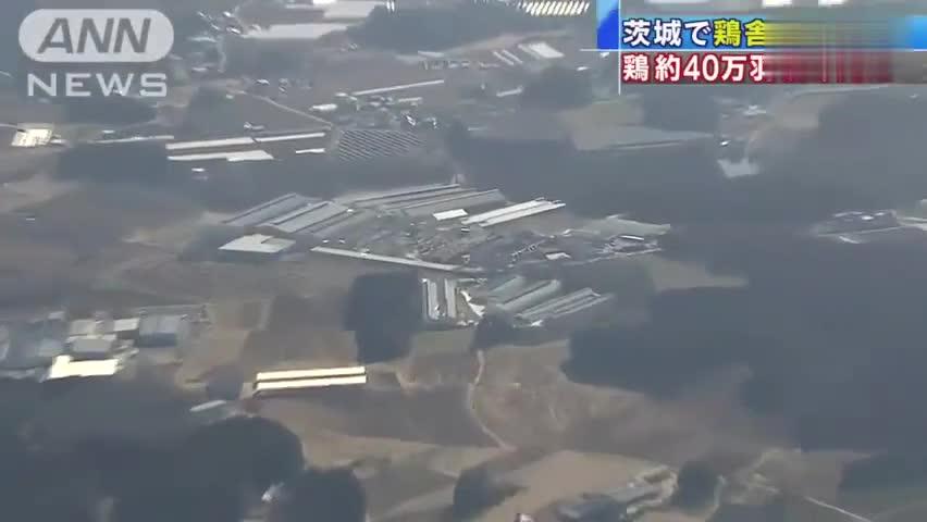 视频-日本一养鸡场失火 40万只鸡被烧死
