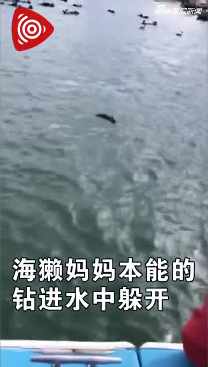 视频-美救援人员播放小海獭叫声 成功使海獭母女团