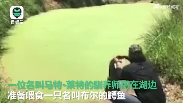 视频:惊险一刻!鳄鱼突然从水塘冲出扑向驯养师