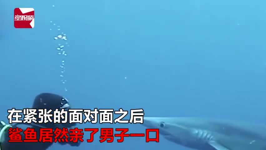 """视频-凶猛鲨鱼张口""""偷袭""""潜水员 亲吻额头后悠闲"""