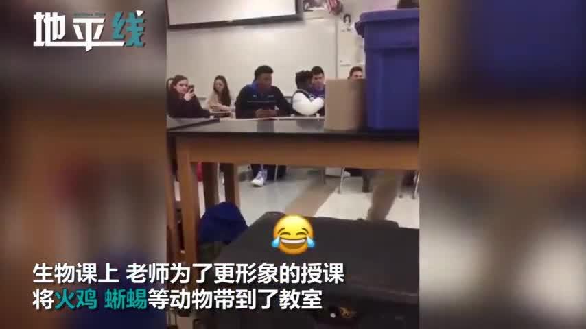 视频|生物老师将火鸡蜥蜴带到教室:抱出蟒蛇一刻学