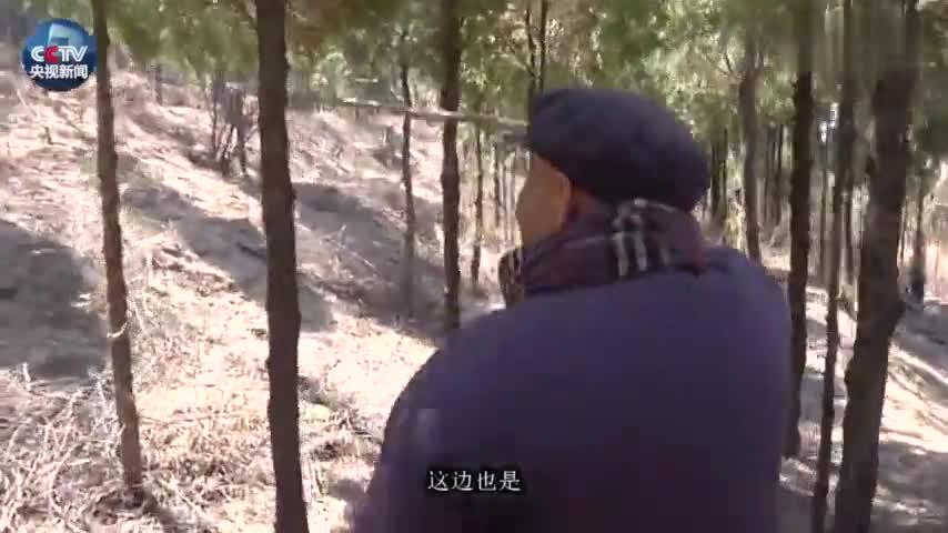 视频:致敬!九旬老人植树35年 用生命守护山林
