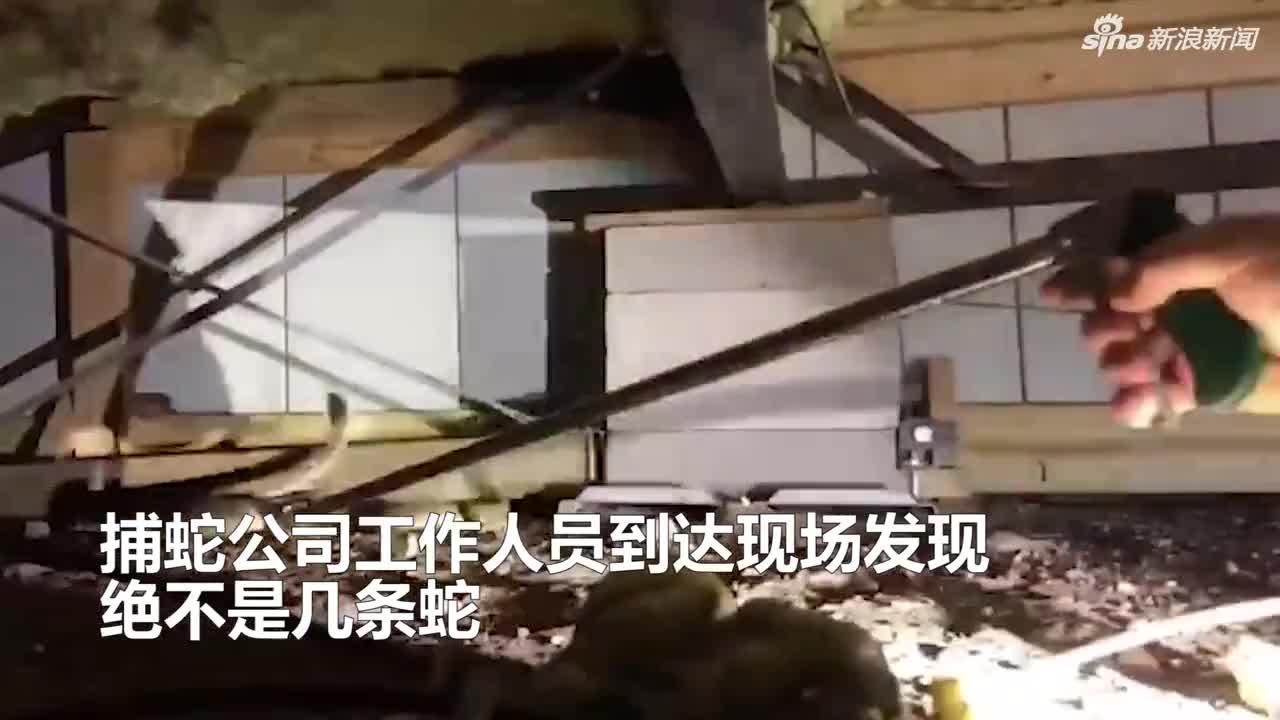 视频:居民称家中有几条蛇 最终竟抓出45条剧毒响