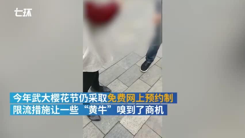 视频:黄牛盯上武大樱花 带入校一人最高一百元