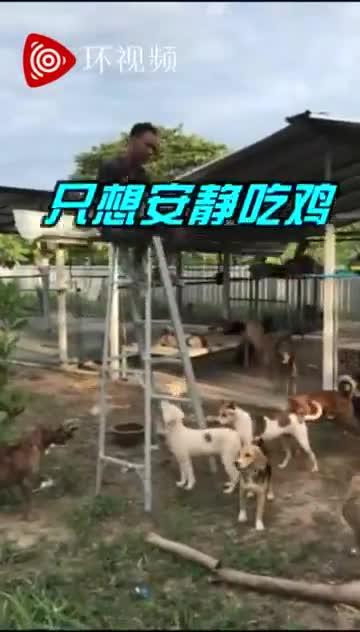 视频-泰男子被一群流浪狗威胁 被迫坐梯子顶吃午餐