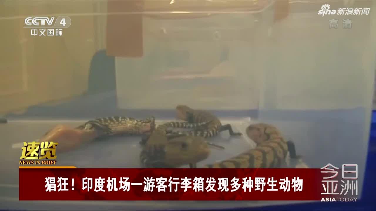 视频-印度机场一游客行李箱发现多种野生动物
