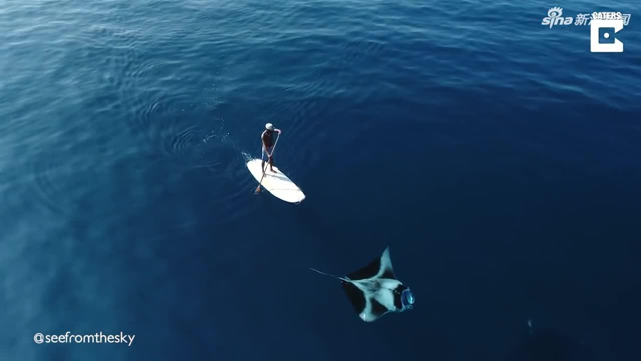 视频:幸运!男子在海上冲浪 意外与巨型鬼蝠魟同游