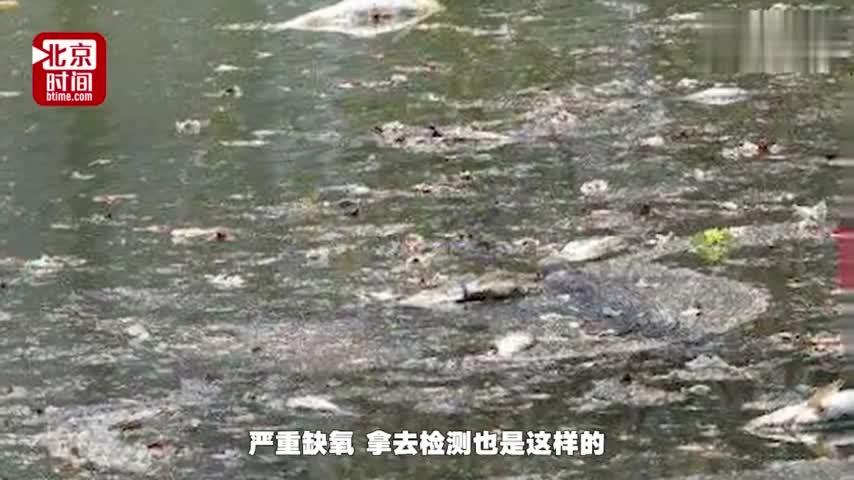 """视频-南昌青山湖一周死万斤鱼 景区人员:""""鱼的体"""