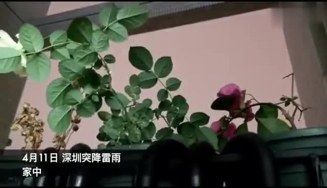视频:深圳突降暴雨 风雨雷电冰雹接连袭来