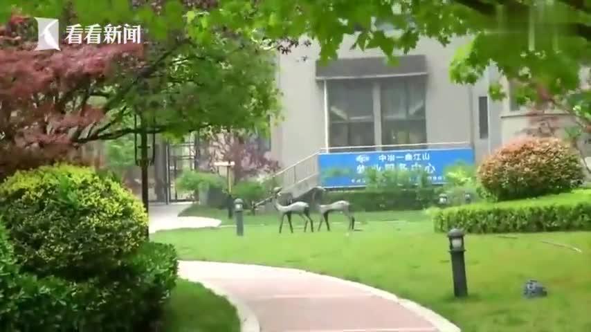 视频-小区野狗频伤人 小泰迪护主遭3只野狗围攻致