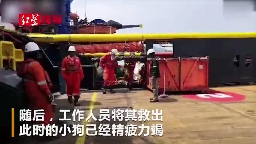 视频:奇迹!小狗海上游200多公里 被石油钻井工