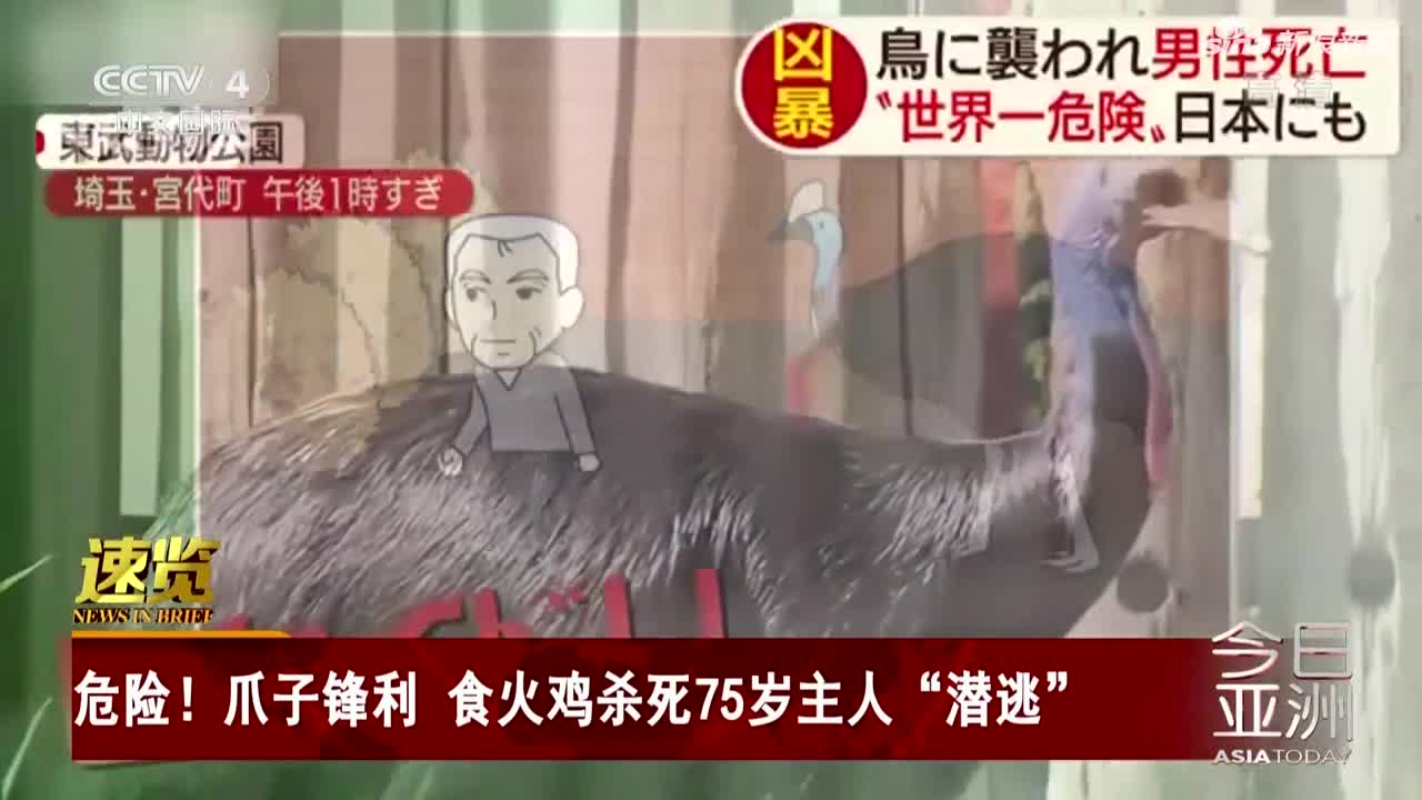 """视频:食火鸡杀死75岁主人""""潜逃"""" 爪子锋利能挖"""