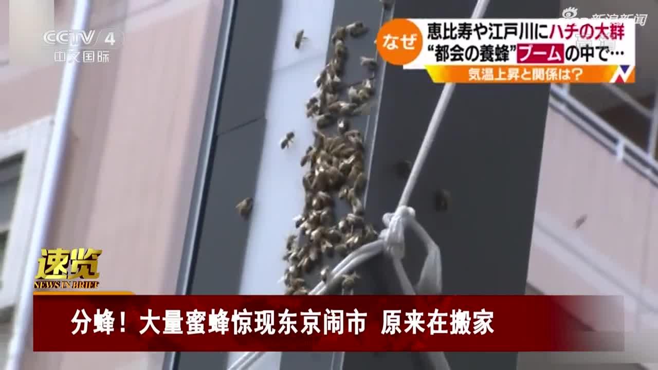 视频-大量蜜蜂惊现东京闹市 专家:分蜂现象 给新
