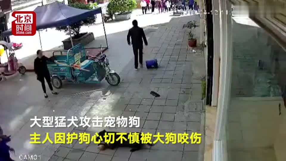 视频-民警击毙咬人比特犬 市民持长棍驱赶仍被咬伤