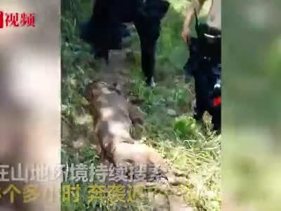 视频-警犬完成任务后中暑 训导员脱衣扇风紧急抢救