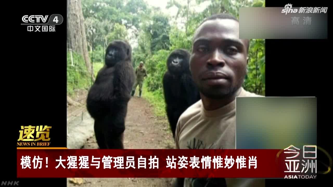 视频-大猩猩与管理员自拍 站姿表情惟妙惟肖似人类
