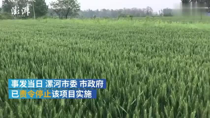 视频-河南百亩麦田强行被毁 村民:我心疼