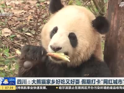 """《上海早晨》四川:大熊猫家乡好吃又好耍  假期打卡""""网红城市""""成都"""