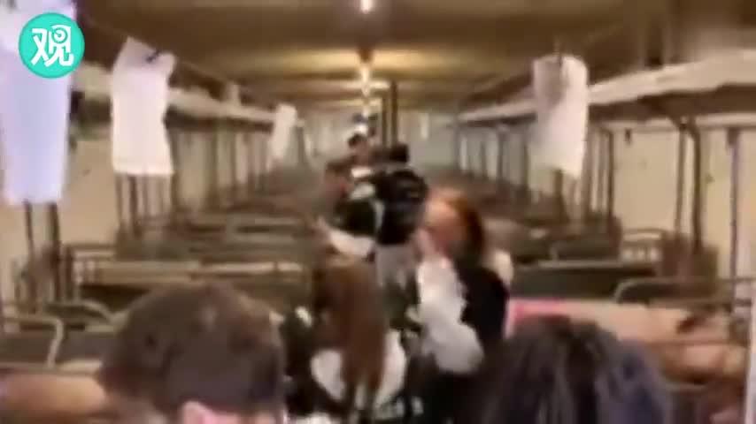 视频:素食主义者硬闯荷兰养猪场 农民发怒当场掀车