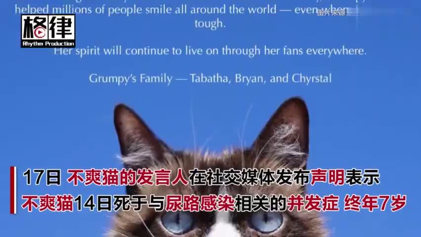 视频:美国7岁网红不爽猫去世 引发全世界网友追悼