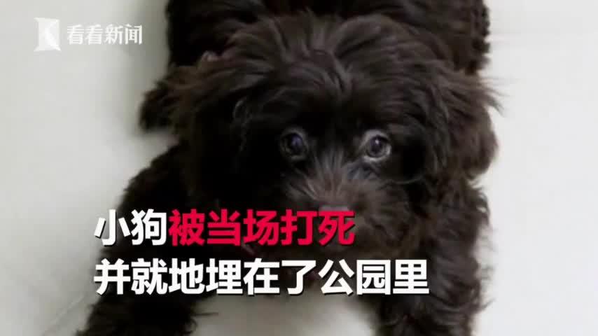 """视频:""""我养的打死又怎样"""" 男子当众虐狗将其打死"""