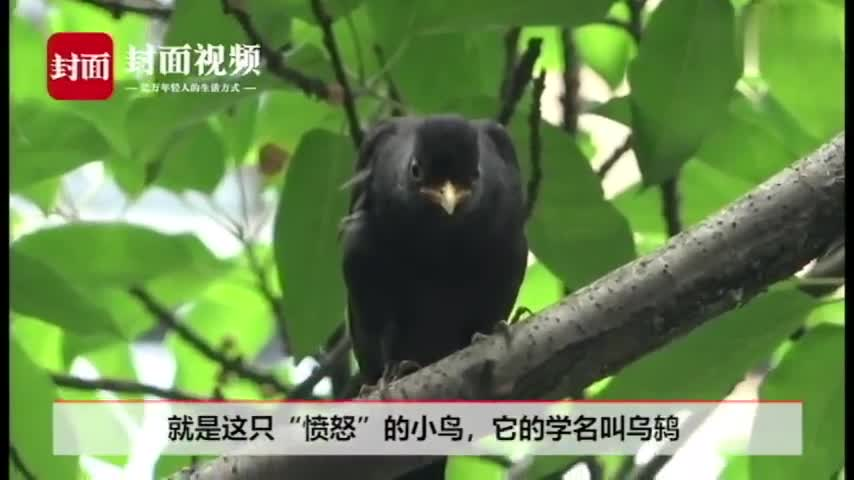 视频:太记仇!小鸟持续一月往狗狗头上拉屎 还叫同