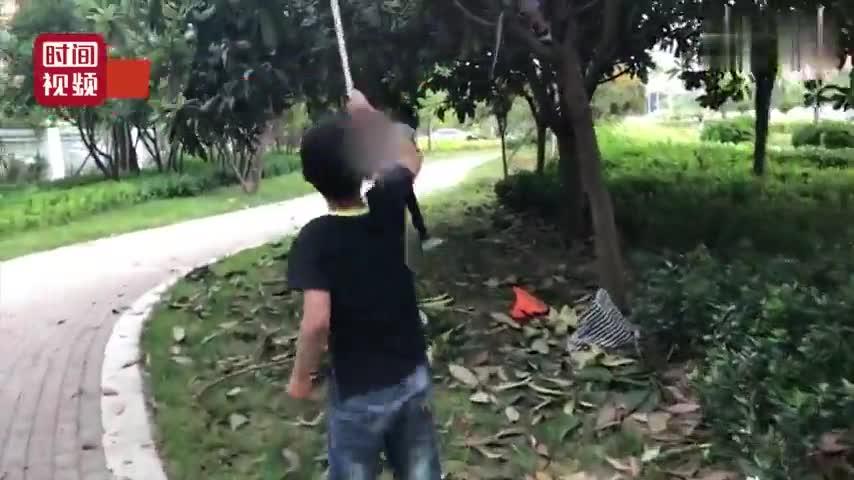 视频-市民路边摘景观枇杷 家长让孩子爬树上摘