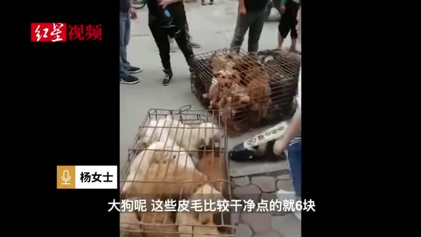 视频-宠物狗论斤卖到狗肉馆:小狗3元一斤、大狗6