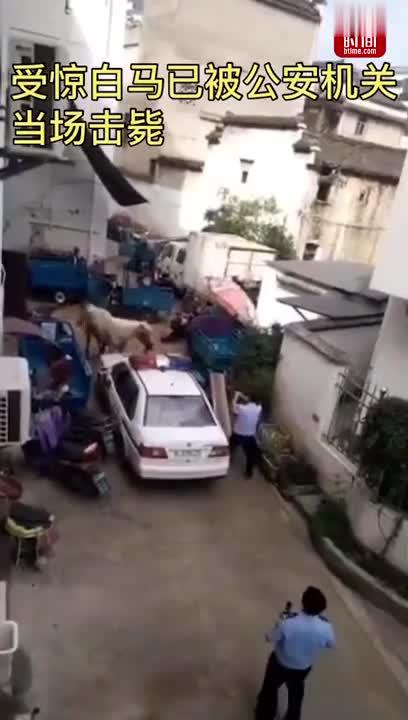 视频-安徽一白马受惊在街上狂奔 撞伤3人后被民警