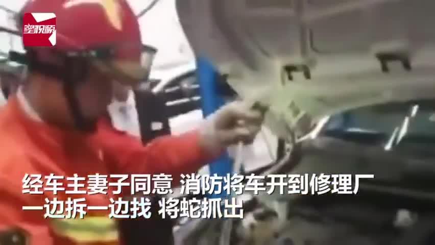 视频|车主求助消防帮抓蛇2天后要求消防修车:抓蛇