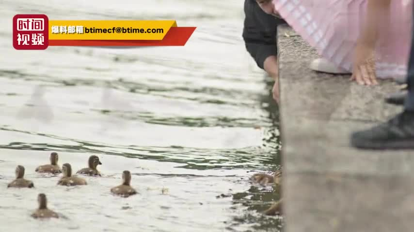 视频-西湖鸳鸯被游客抓伤死亡 男游客:我拿来玩玩