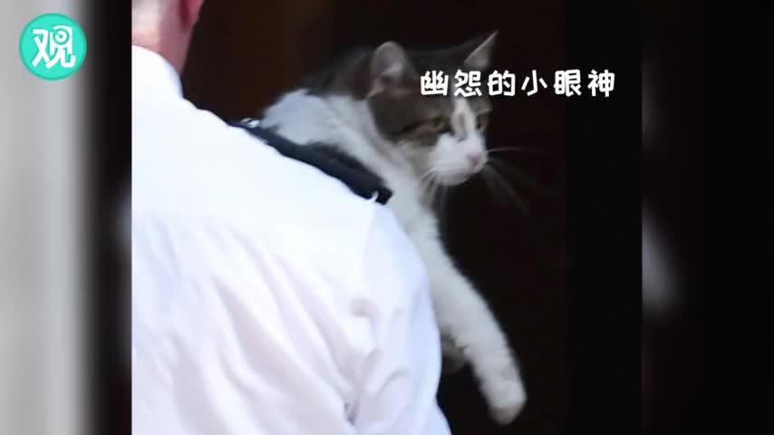"""视频:梅首相宣布辞职前,捕鼠大臣拉里被""""清场"""""""