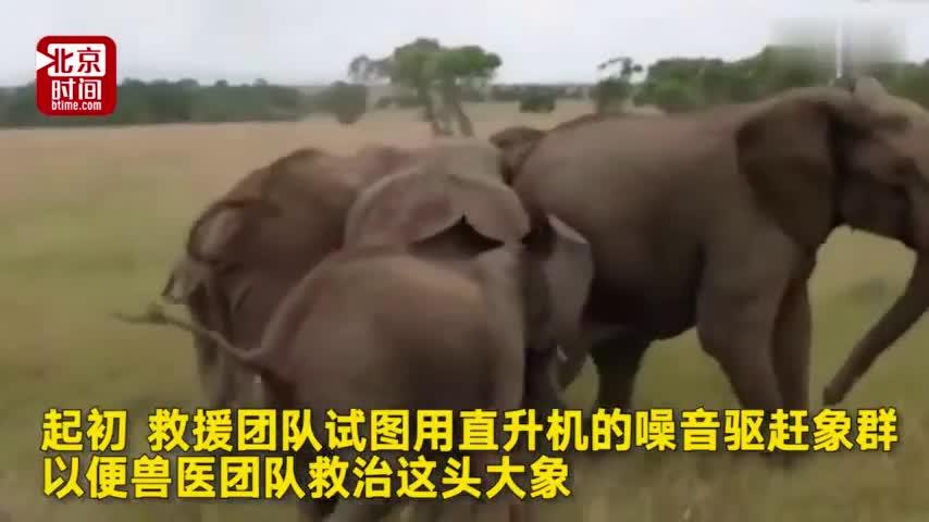 视频:肯尼亚大象中箭倒地 同伴不离不弃用脑袋帮它