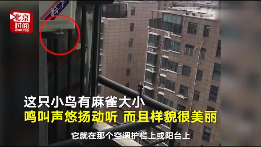 视频:跨物种友谊!小鸟飞10楼每天准时窗前撩拨猫