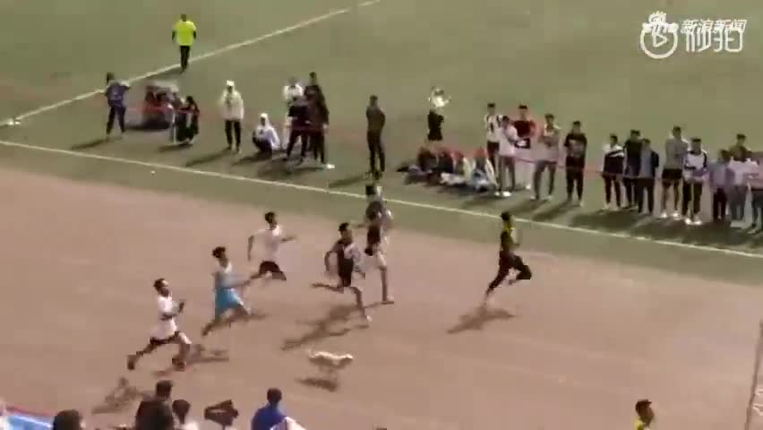 视频-高校运动会上 流浪狗拿到了第三名