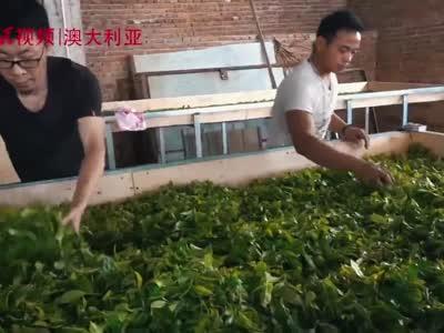 歪果仁眼中的中国:七彩云南·普洱