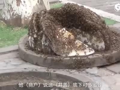 选择性失误!蜜蜂安家遇高考:摘除