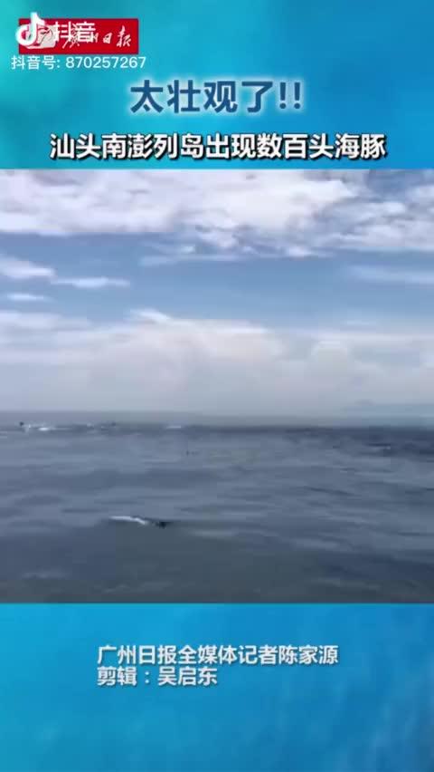 视频-太壮观!汕头海域出现数百头海豚嬉戏追逐