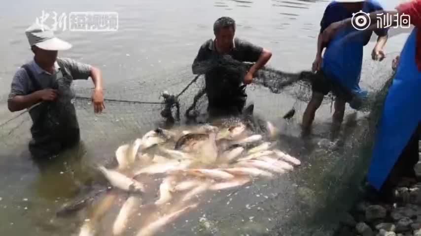 视频:又是别人家的 高校捕上千斤大鱼请毕业生吃全