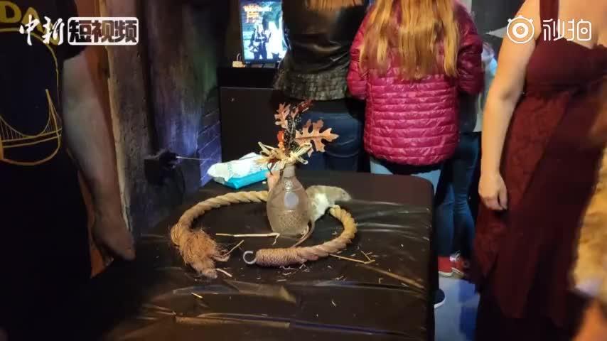 """视频:旧金山惊现""""老鼠酒吧"""" 顾客边喝酒边和老鼠"""