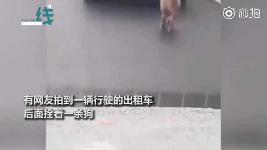 视频:的哥开出租车遛狗还穿梭变道:下雨怕狗弄脏座